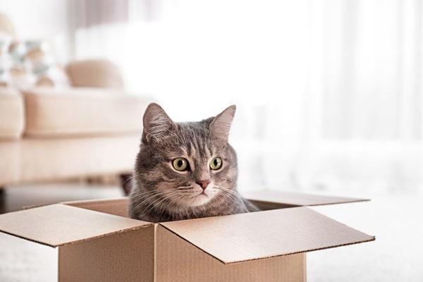 déménagement vente maison